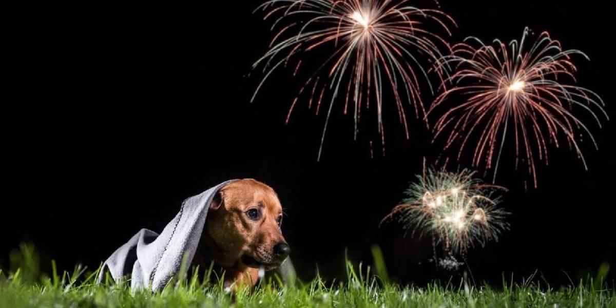 Te decimos en 6 pasos cómo evitar que los fuegos artificiales afecten a tu mascota