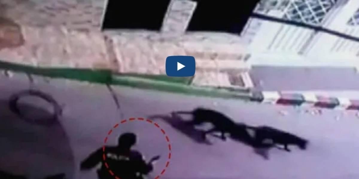 VIDEO: policía mató una perrita durante una requisa en Bogotá