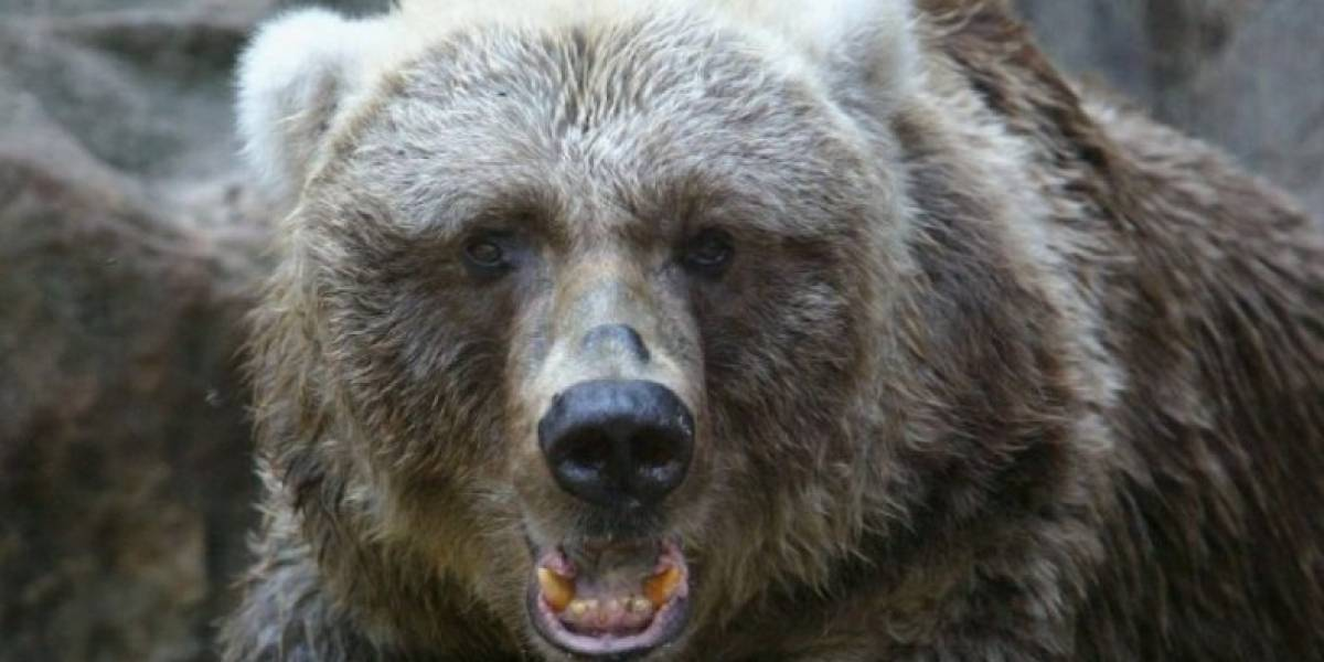 Había estado bebiendo y se jactaba que podía alimentar a un oso enjaulado hasta que el animal le arrancó el brazo y se lo comió