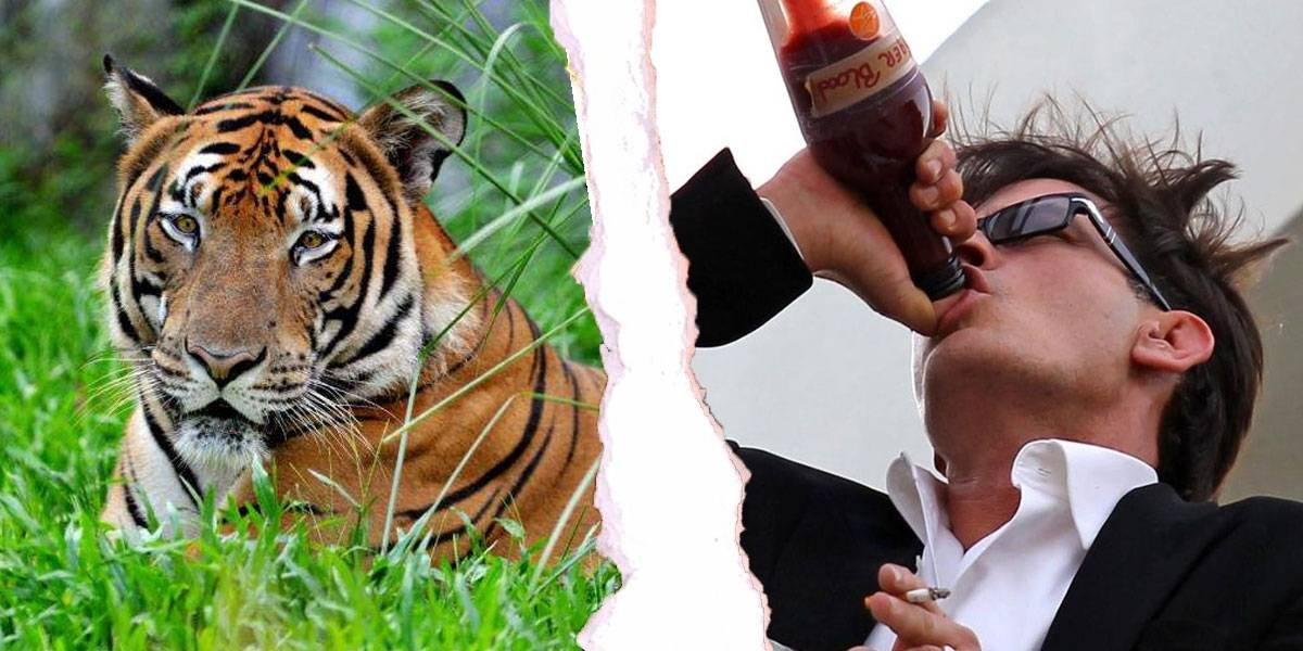 China manda ADN de tigre al espacio y tienen un motivo