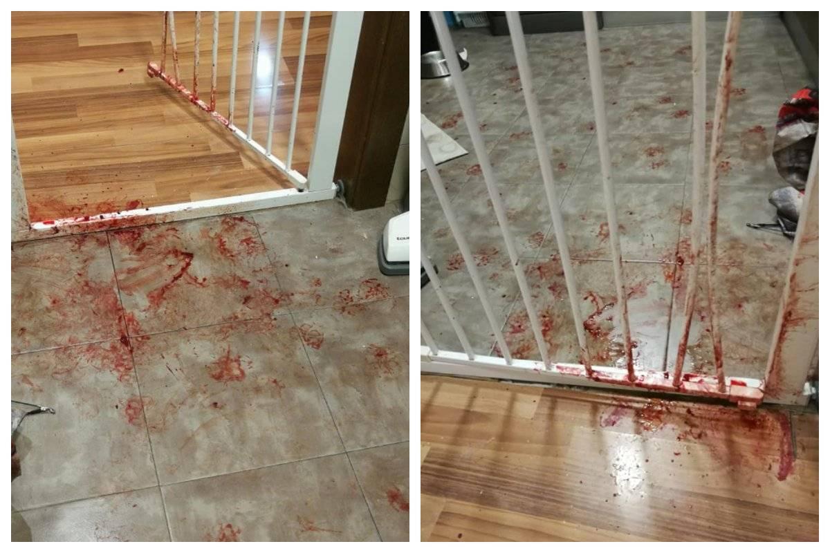 piso ensangrentado perra en pánico