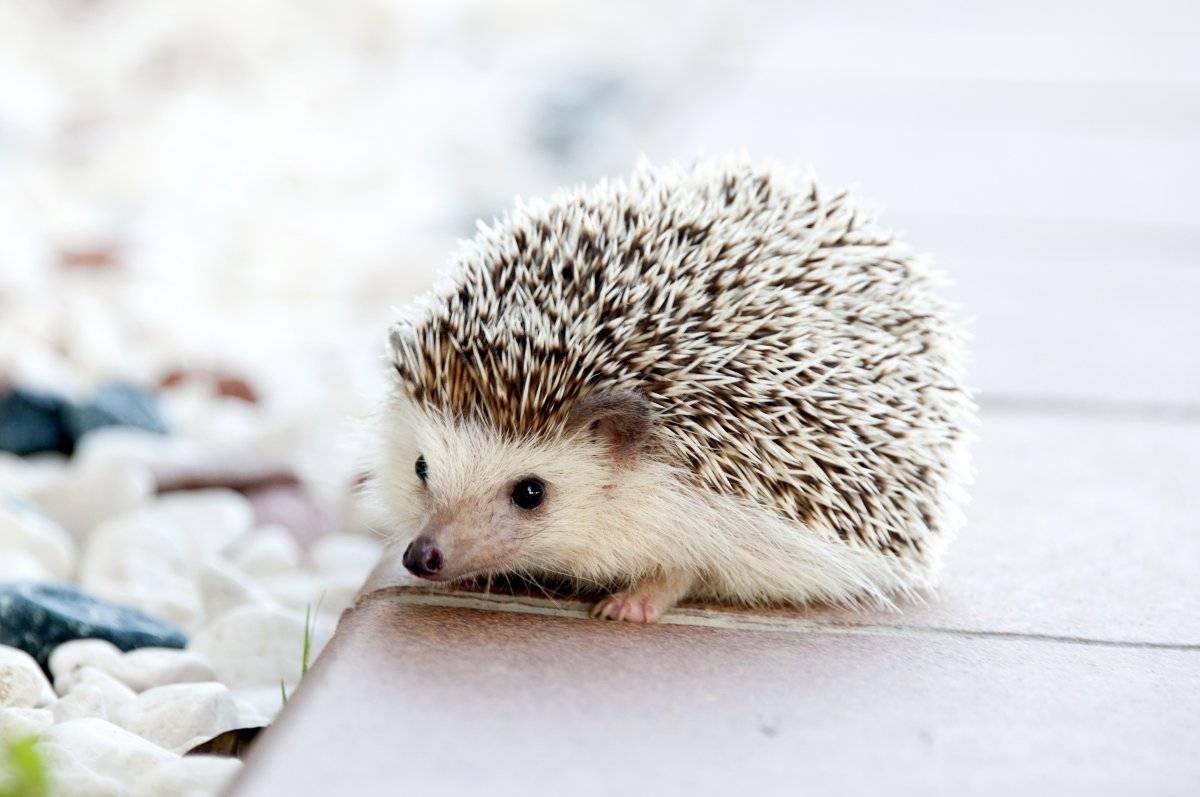 La ciencia por fin explica por qué queremos abrazar animales tiernos