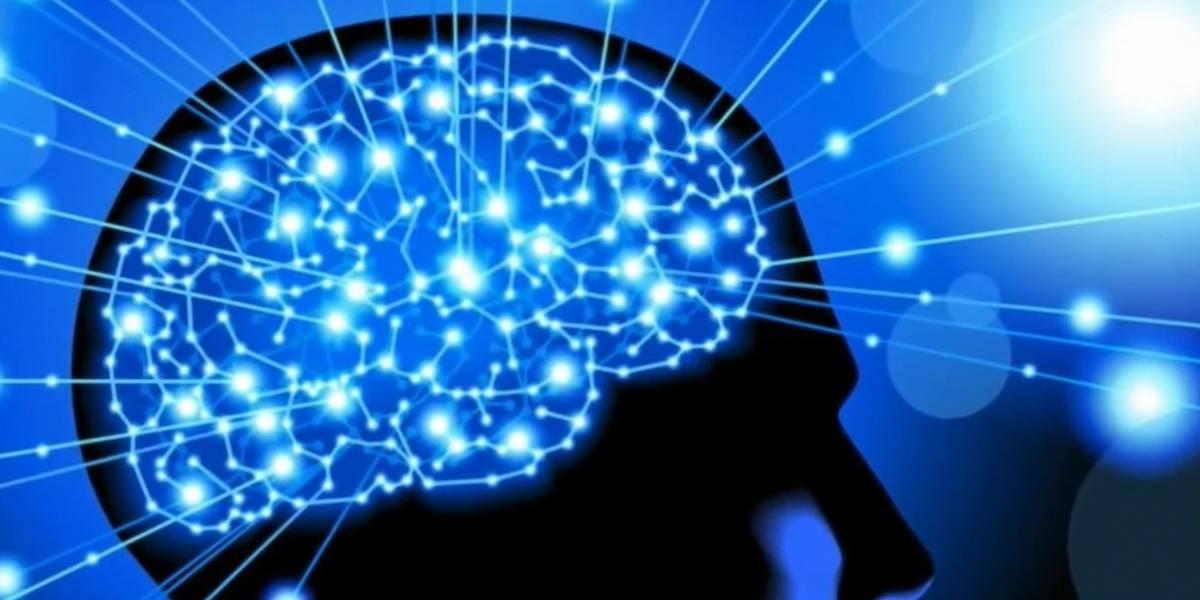 Cerebro seguiría creando neuronas hasta que cumplimos los 90 años