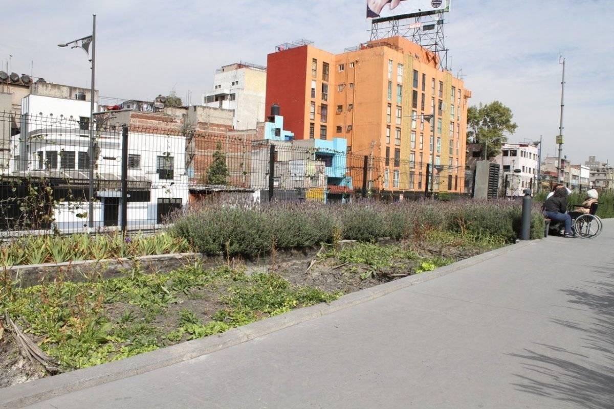 Las plantas se marchitaron Foto: Nicolás Corte