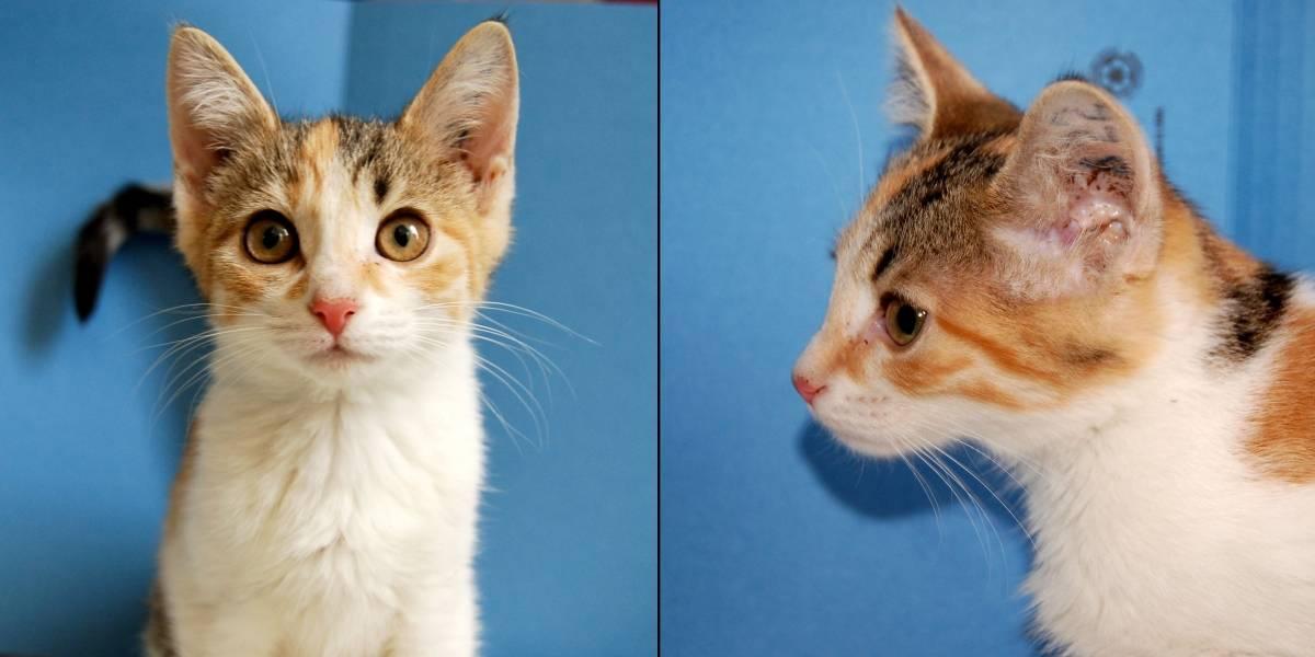 """Se viene la era de las mascotas """"personalizadas"""": pronto nacerán los primeros gatitos completamente clonados"""