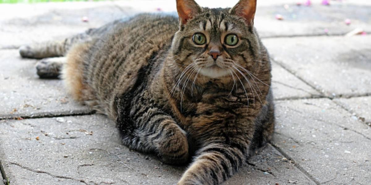 Pareja pierde a su gato, lo encuentra un año después y estaba el doble de gordo: se había escapado a vivir en fábrica de alimento de mascotas