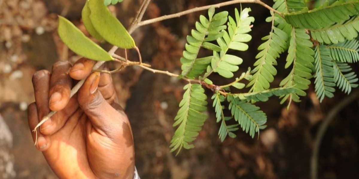 Conheça dez novas espécies de plantas descobertas em 2018