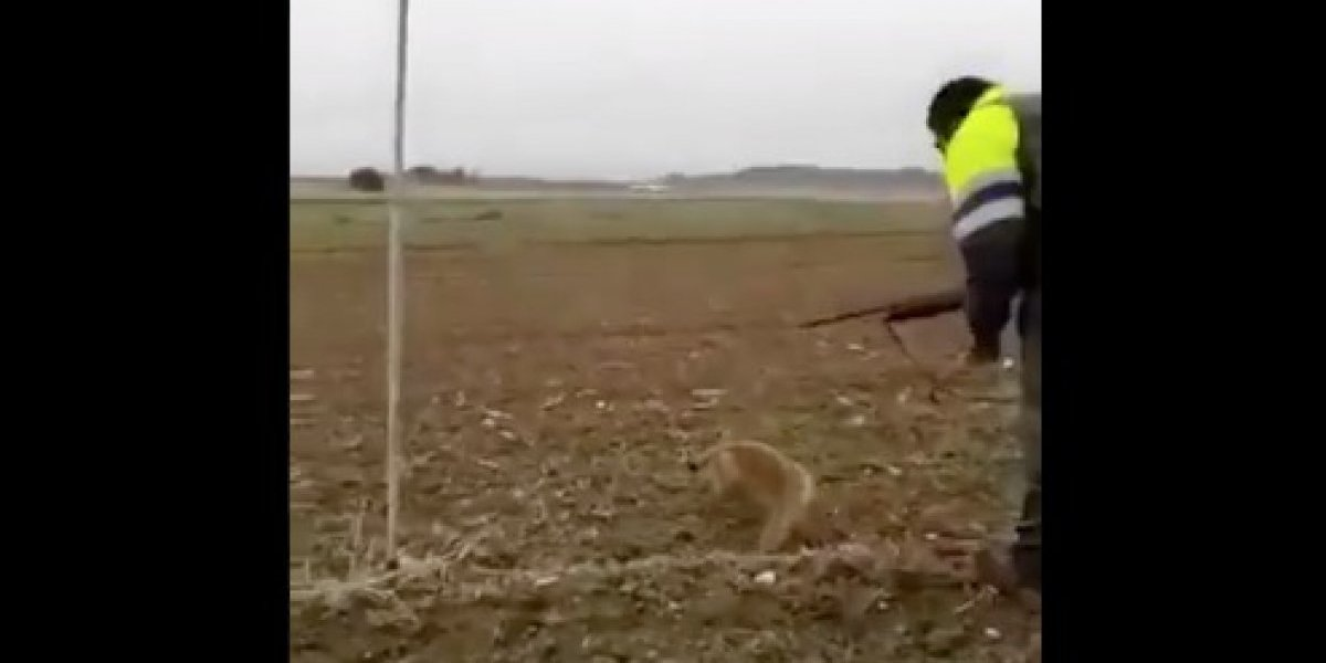 Imágenes de extrema dureza: cazador patea sin piedad a un zorro indefenso y despierta la ira en internet