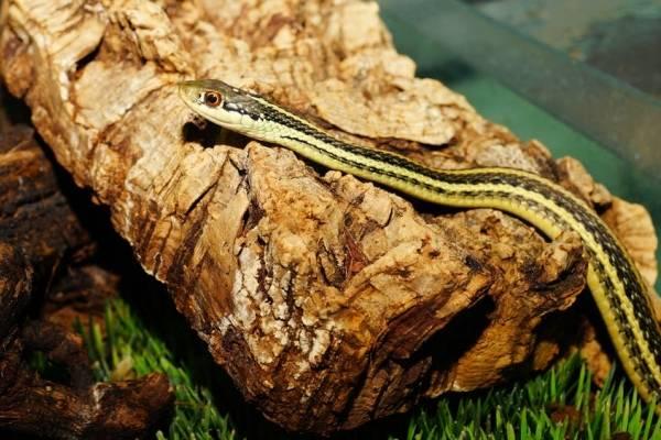snake22