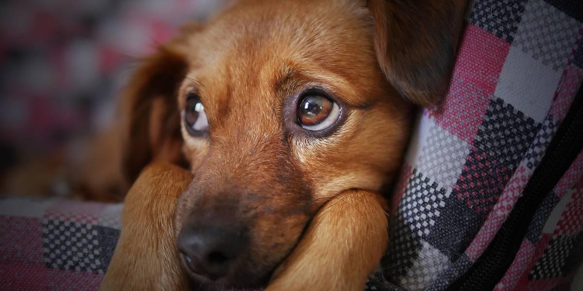La venta de mascotas empezará a prohibirse en 2019