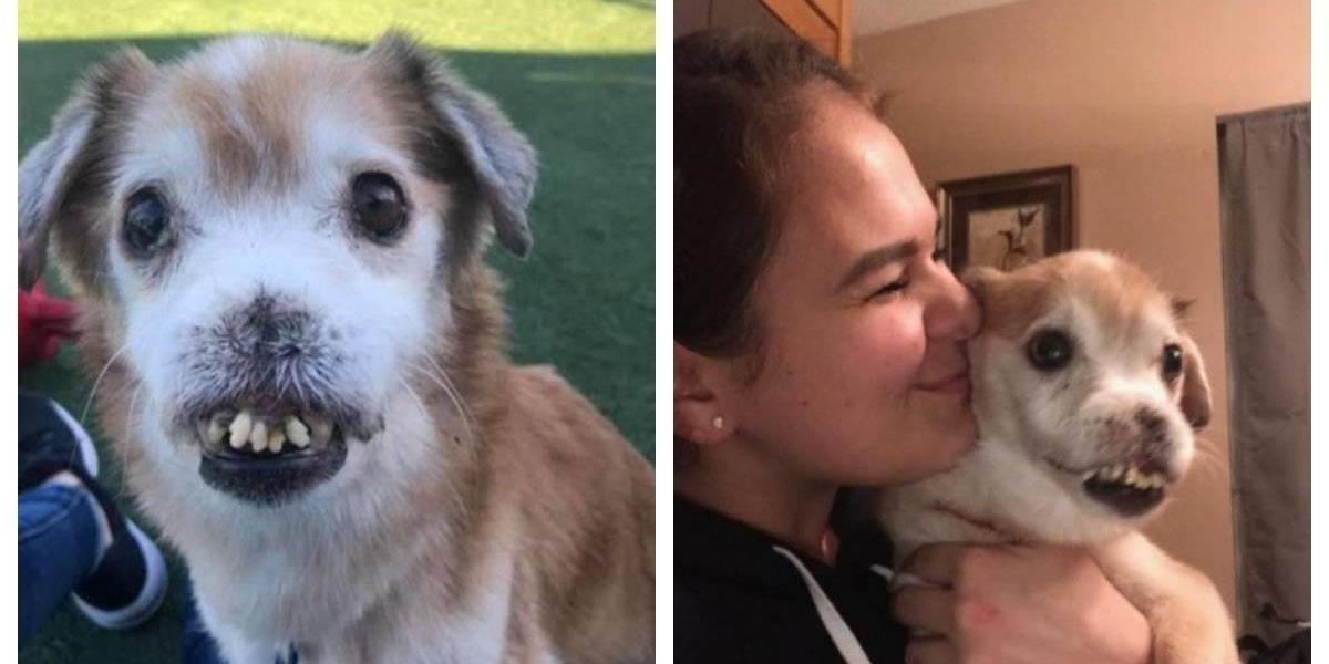 La conmovedora historia de Sniffles, un perro callejero sin nariz