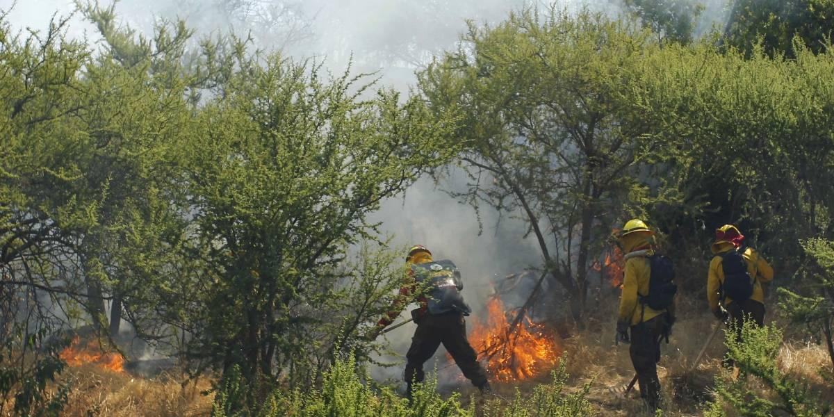 Alerta roja en Lampa por incendio forestal: 200 personas evacuaron camping