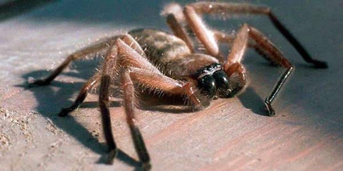 Fobias de mexicanos: miedo a las arañas, a los perros y a las inyecciones