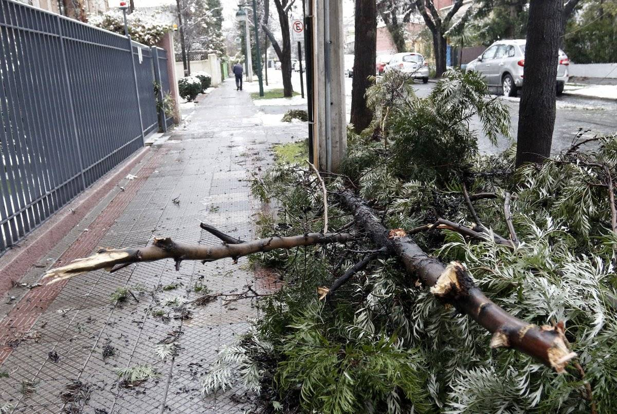 árbol caído en Santiago