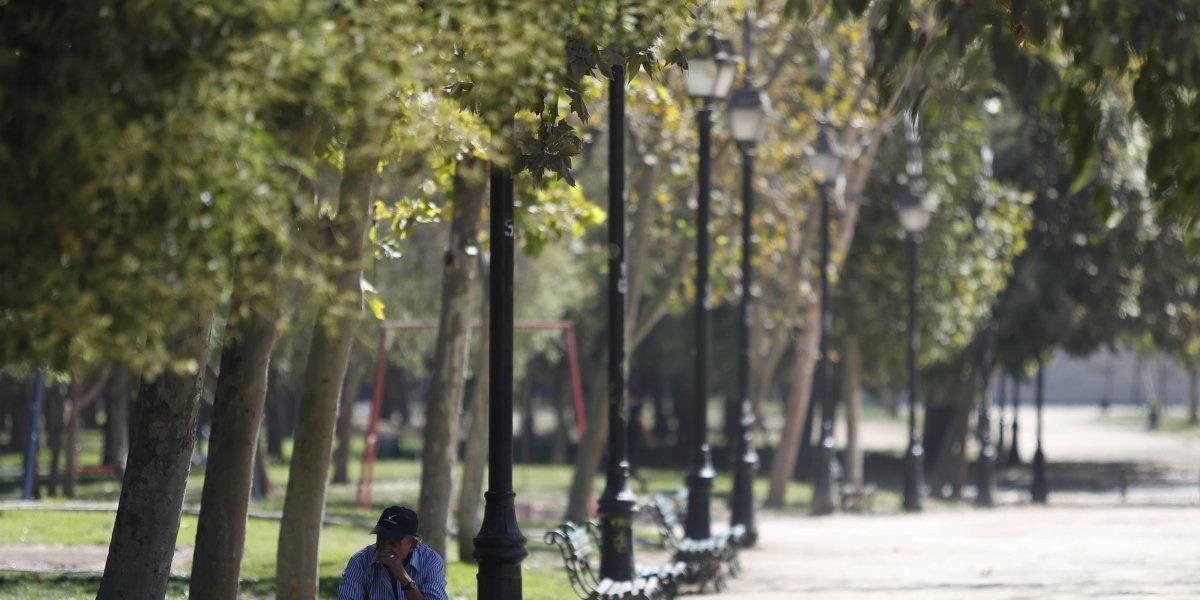 Árboles viejos, enfermos y secos: el problema que aqueja al 40% del parque arbóreo de Santiago