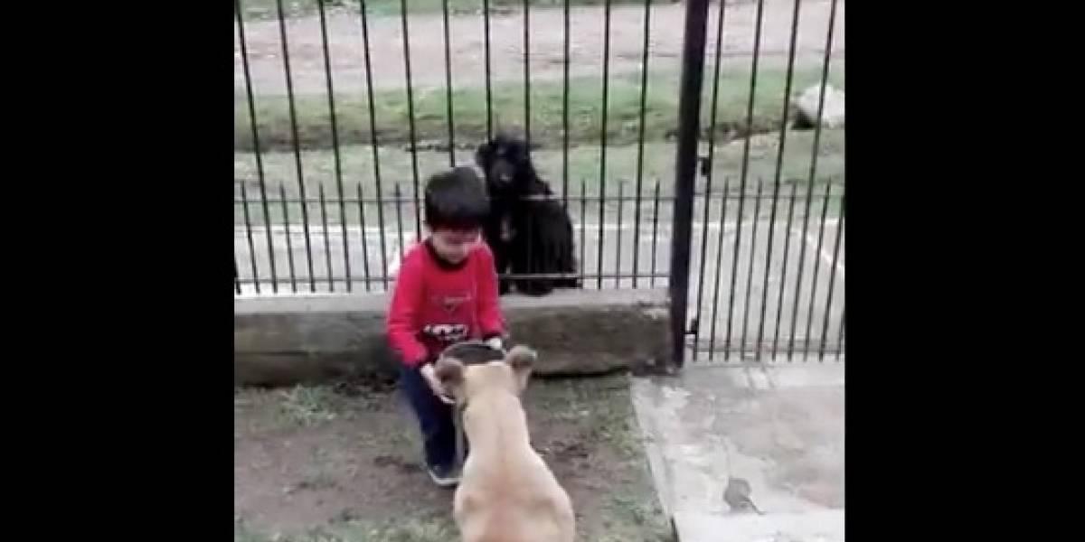 El hermoso gesto de niño hacia perro callejero que se robó el corazón las redes sociales