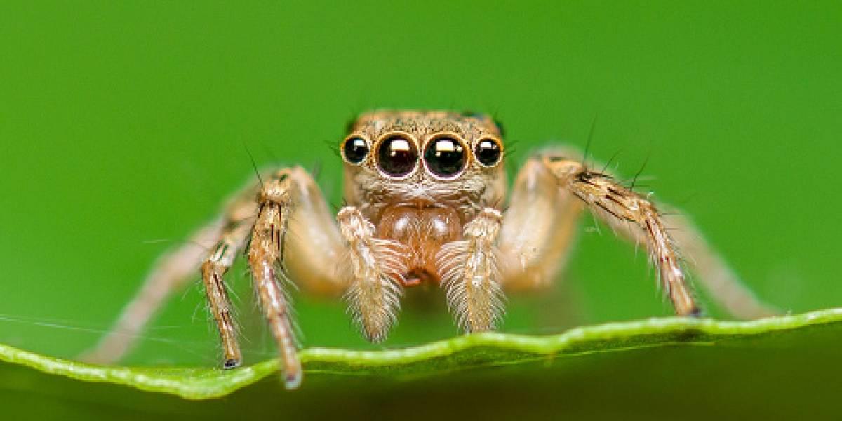 Pensó que era un tierno animalito: vio un bulto peludo en una pared, se acercó a tocarlo y arrancó de miedo tras hallar ejército de arañas