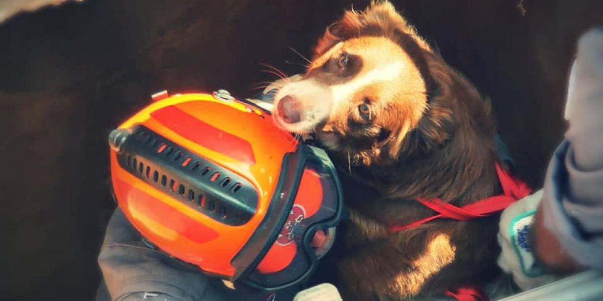 Assustada com queima de fogos, cachorra cai em bueiro e fica presa em tubulação