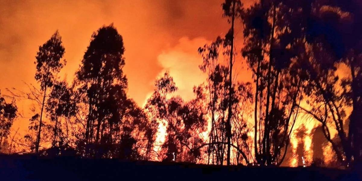 Incendio forestal de Santo Domingo ya es el más extenso de la temporada: lleva más de mil hectáreas consumidas por las llamas