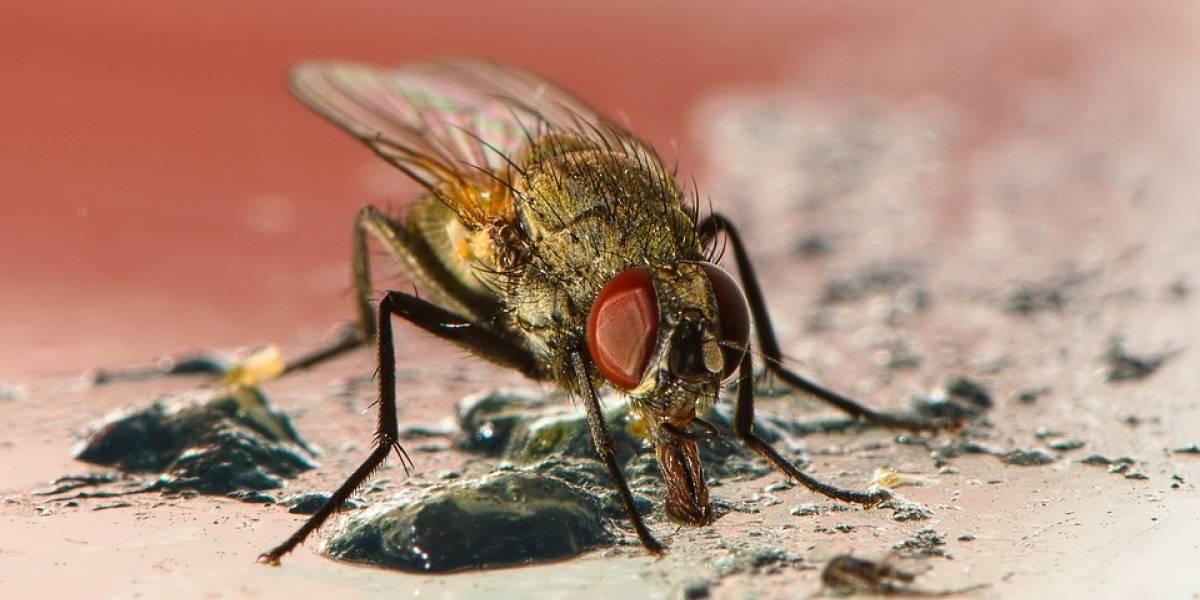 ¿Cuántas bacterias deja una mosca al posarse en la sopa?