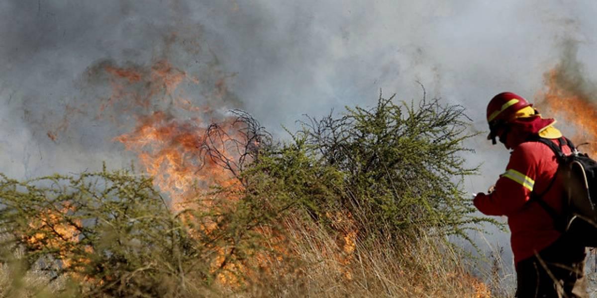 Incendio forestal en Santo Domingo no da tregua