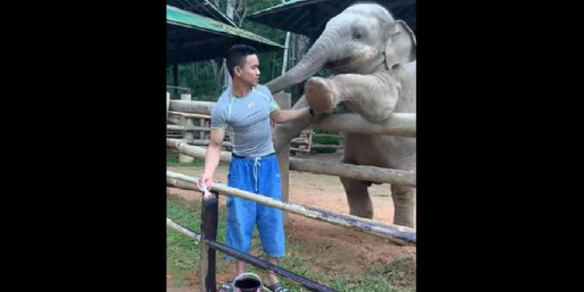 La cariñosa relación entre un elefante y su cuidador que enternece a las redes