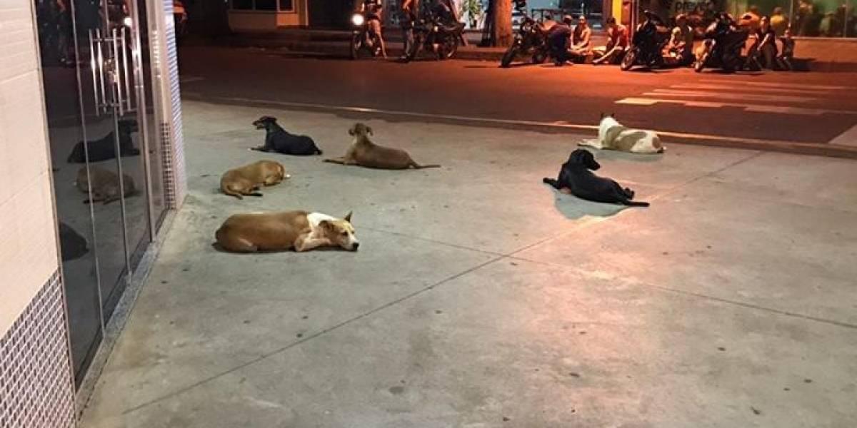 Cachorros esperam na porta de hospital por morador de rua internado