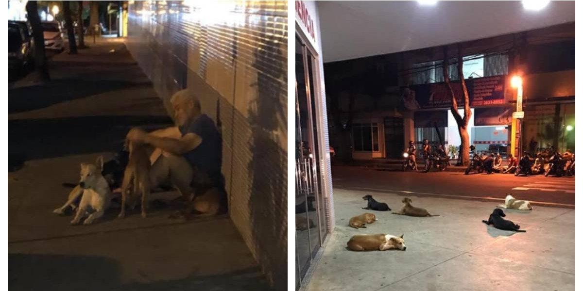 Fidelidad total: sufrió un derrame y sus seis perros persiguieron a la ambulancia y lo esperaron fuera del hospital durante 24 horas