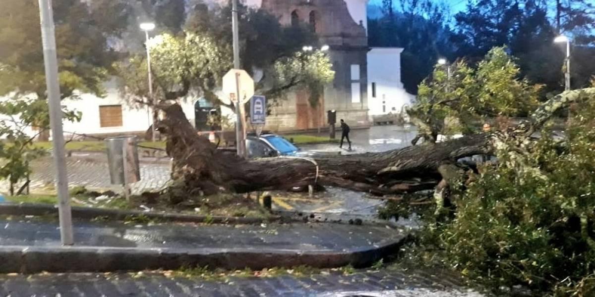 Quito: Árbol caído en el parque de Guápulo obstaculiza paso vehicular