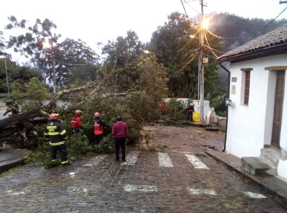Árbol caído en el parque de Guápulo obstaculiza paso vehicular AMT