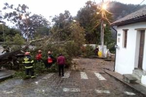 Árbol caído en el parque de Guápulo obstaculiza paso vehicular