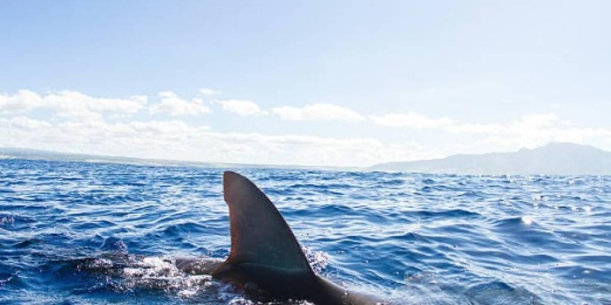 Joven de EEUU fallece por ataque de 3 tiburones en Bahamas