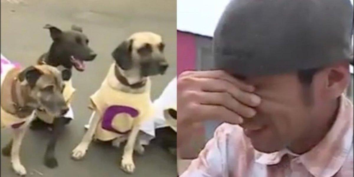 """Envenenan y matan a nueve canes del famoso """"Domador de Perros"""" en Perú"""