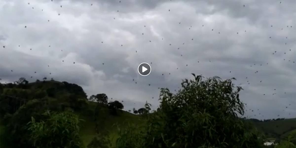 VÍDEO: Chuva de aranha assusta moradores no sul de Minas
