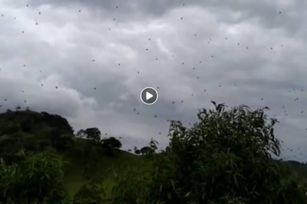 chuva de aranha
