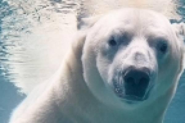 El Fotografo Que Viaja Por El Mundo Haciendo Retratos De Animales En Peligro De Extincion Metro