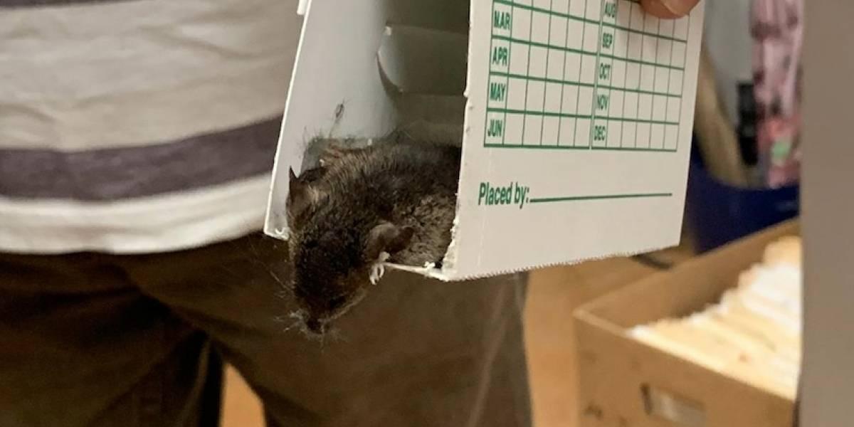 Radican querella contra CESCO y DISCO Metropolitano por plaga de ratones en oficinas
