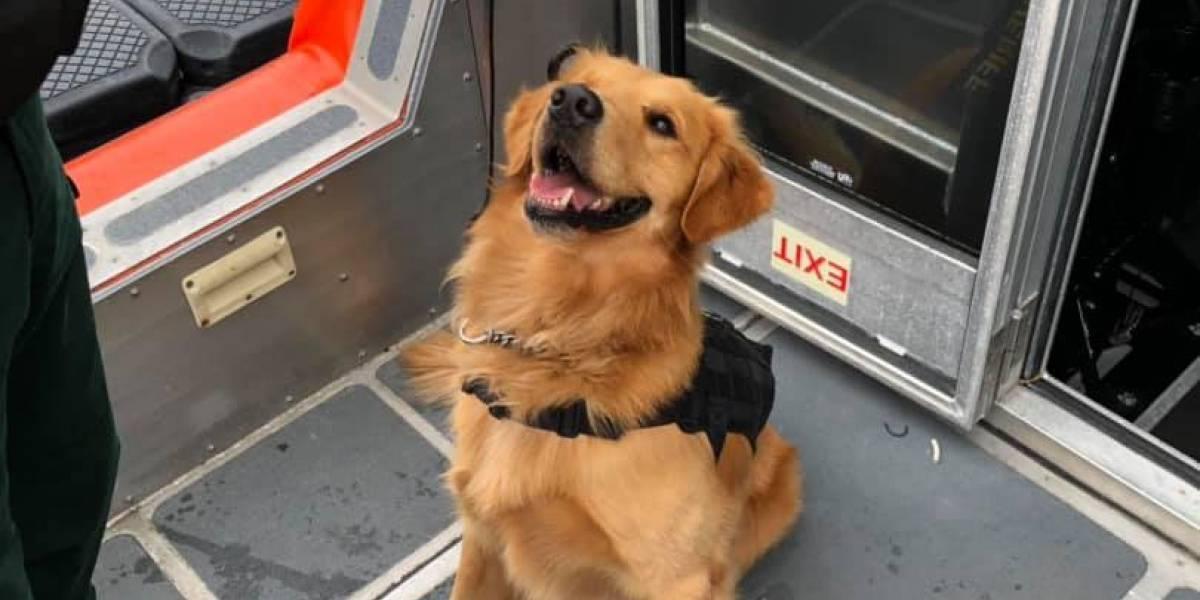 Perro antidrogas sufre sobredosis tras oler a pasajero