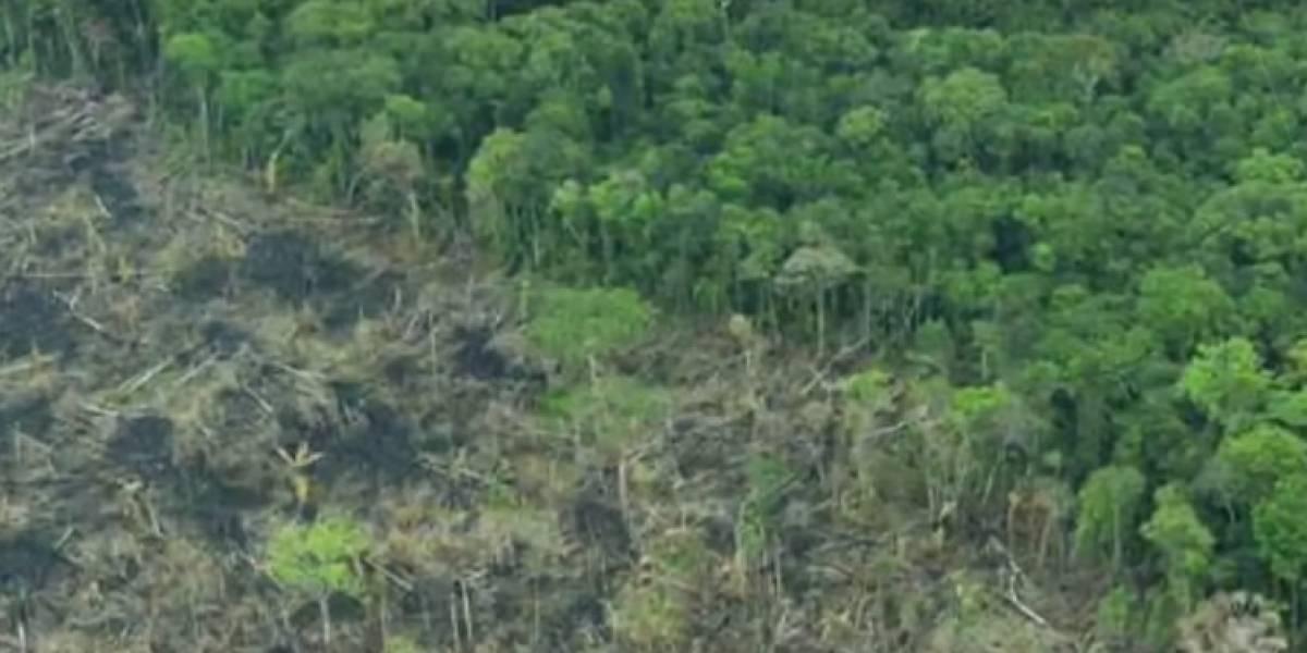 La millonaria suma que Colombia y Reino Unido destinan para enfrentar deforestación en el país
