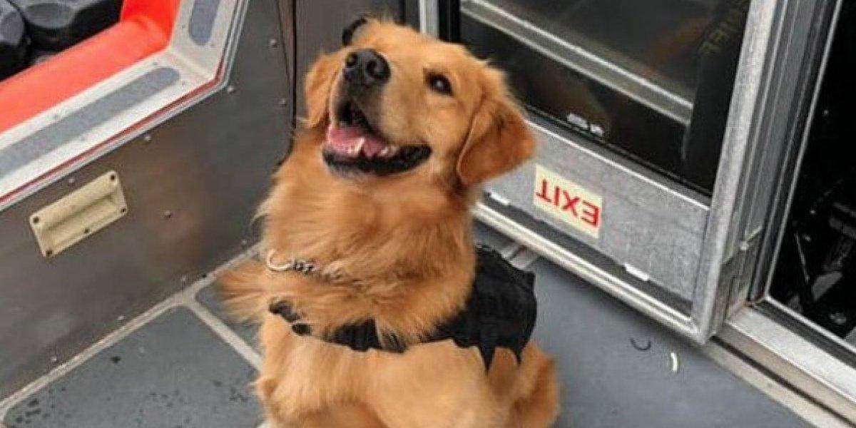 Perro antidrogas sufre sobredosis tras oler a un asistente de un crucero de música electrónica