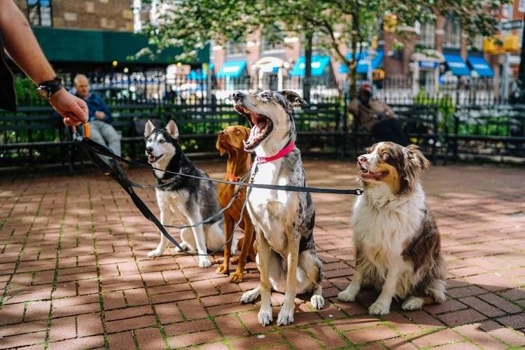 licenciatura para entrenar perros