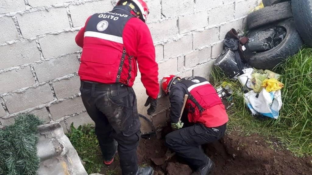 Bomberos rescatando a perrito en Quito Bomberos Quito