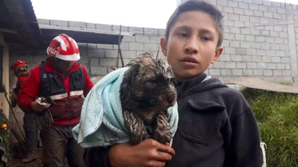 Rescate de cahorro que cayó en una zanja Bomberos Quito