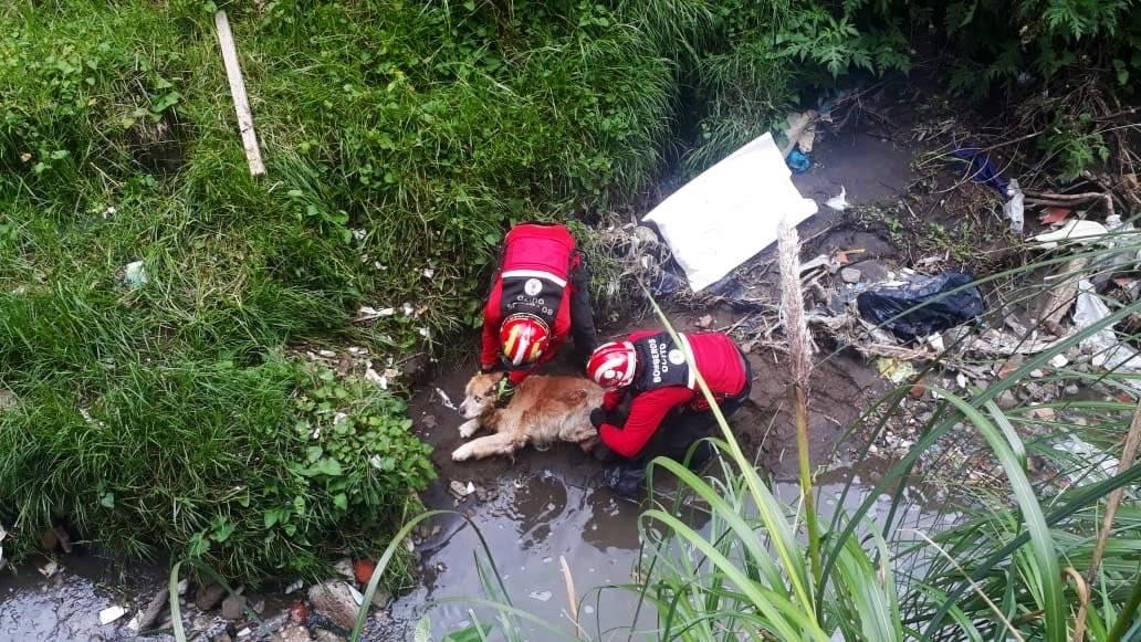 Perrito fue rescatado de una quebrada Bomberos Quito
