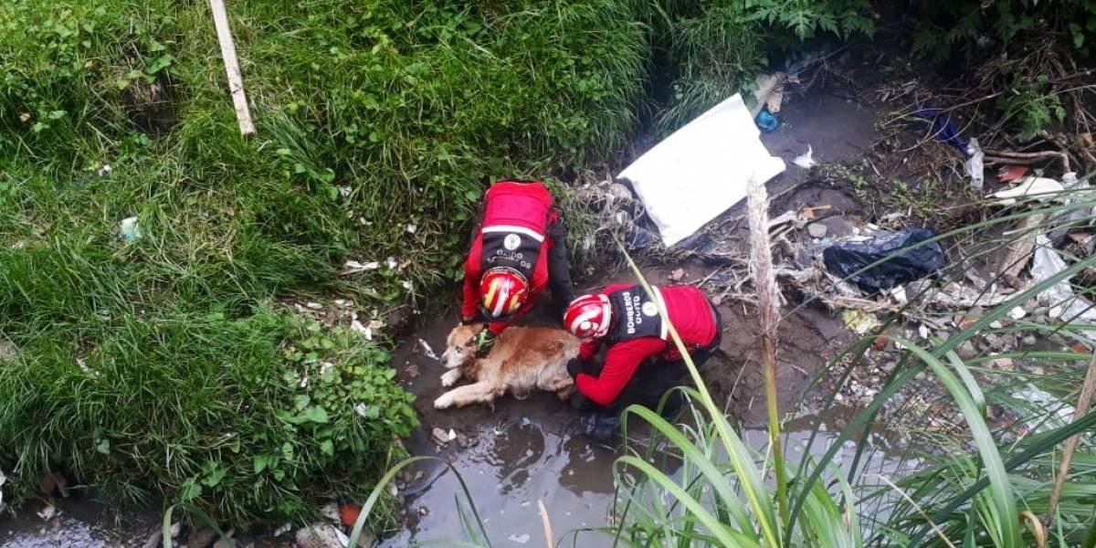 ¡Gracias héroes! Bomberos de Quito rescataron a dos perritos