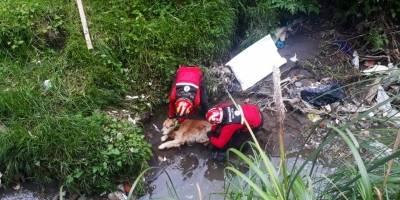 Perrito fue rescatado de una quebrada