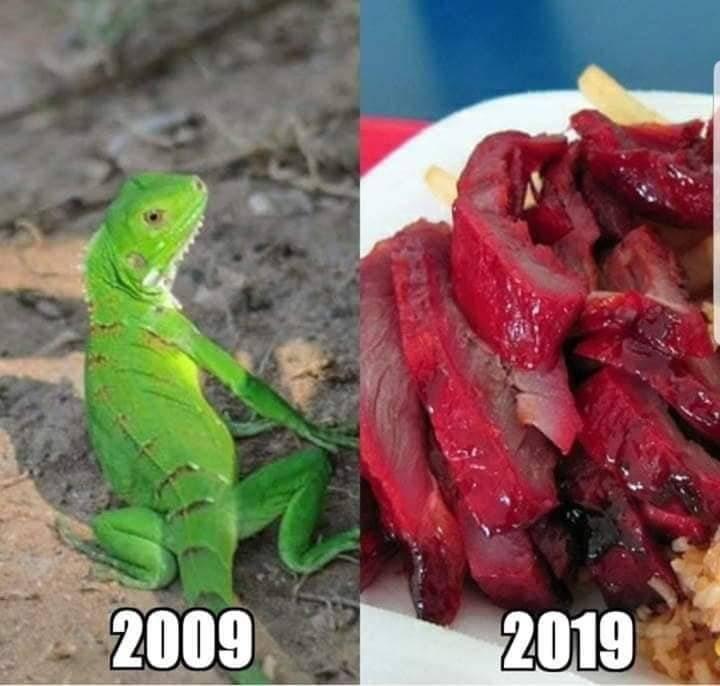 iguana chinos