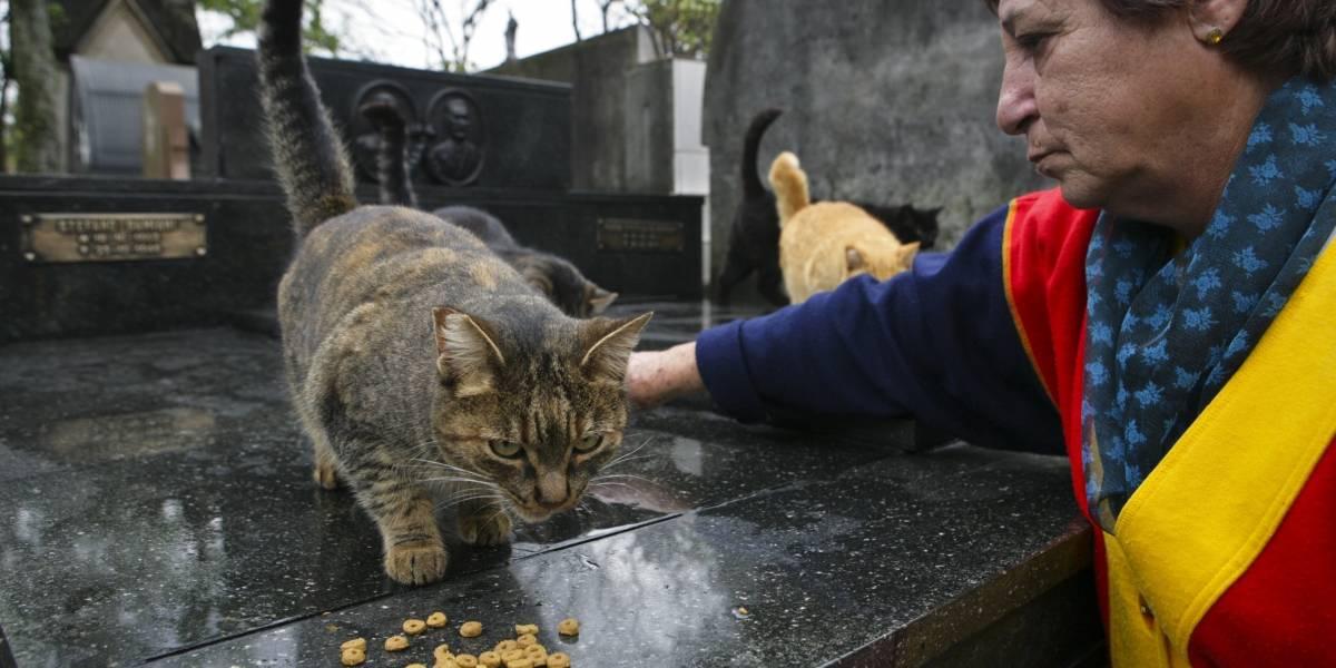Prefeitura volta atrás e funcionários de cemitérios podem cuidar de animais abandonados
