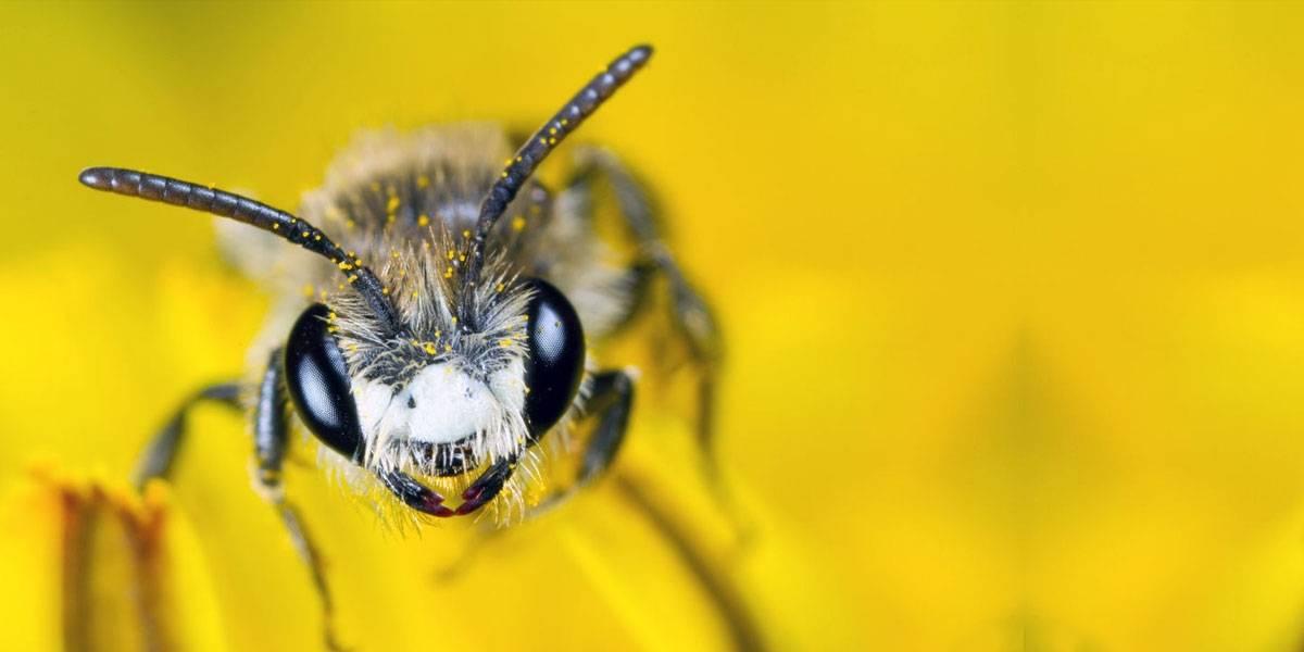 Sonic Boom: video de abejas creando ondas de sonido para defenderse se hace viral