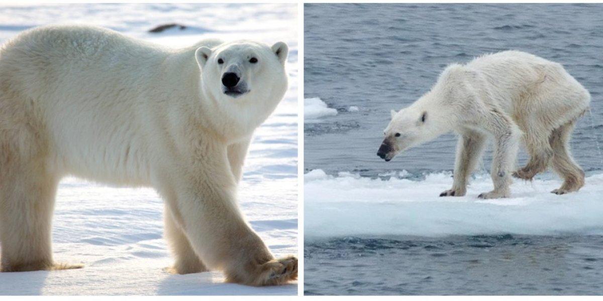 El #10yearschallenge más triste: fuertes imágenes muestran cómo se ve el reto con la naturaleza y el avance del calentamiento global